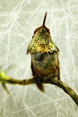 Kleiner Vogel - p4150657 von Tanja Luther