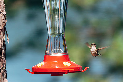 Hummingbird - p1065m982632 by KNSY Bande