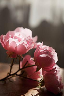 Roses - p1149m938371 by Yvonne Röder