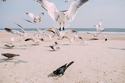 Seagulls and pigeons at beach against sky - p1166m1231532 by Cavan Images