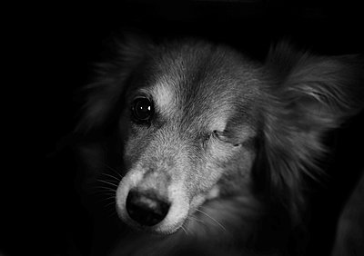 One-eyed dog - p1229m2206408 by noa-mar