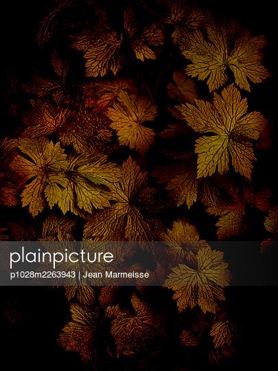 Leaves - p1028m2263943 by Jean Marmeisse