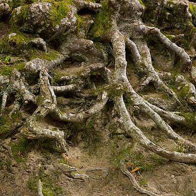 Old roots - p8130174 by B.Jaubert