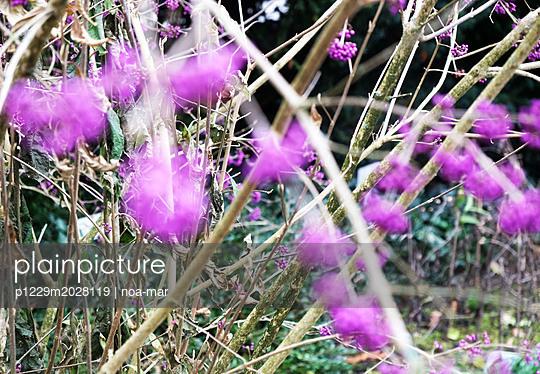 Lila Blumen - p1229m2028119 von noa-mar