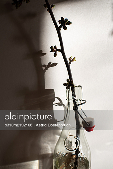 Twig of a cherry tree - p310m2192166 by Astrid Doerenbruch