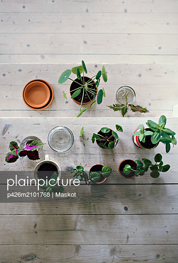 Directly above view of plants on wooden steps at home - p426m2101768 by Maskot