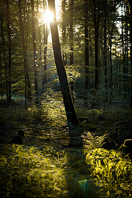 Wald im Frühling - p1273m1207626 von melanka