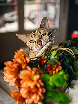 Katze neben Blumen - p1522m2093452 von Almag