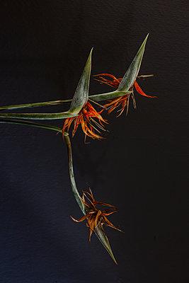 Papageienblumen - p1621m2199901 von Anke Doerschlen