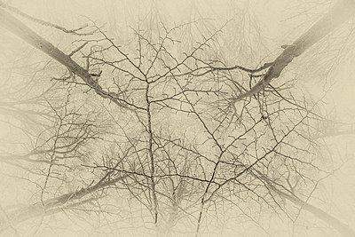 Wald - p1205m1515947 von Toni Anzenberger
