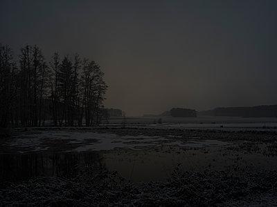 Waldstück in der Dämmerung - p370m2020685 von David Hartfiel