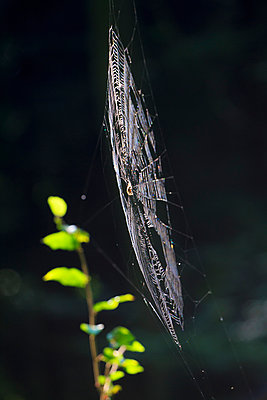 Spider's web - p417m932751 by Pat Meise