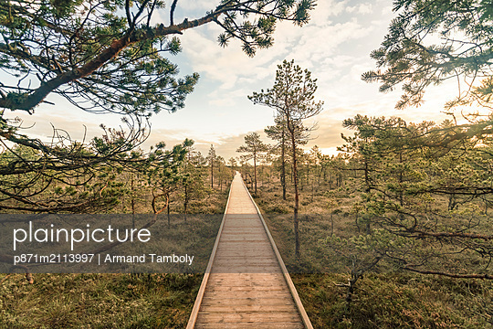 Lahemaa National Park early in the morning in autumn, northern Estonia, Europe - p871m2113997 by Armand Tamboly