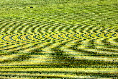 Crop field - p1427m2085081 by Steve Smith