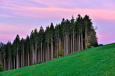 Germany, Bavaria, Allgaeu, landscape at Auerberg - p300m978129f by Kontrastlicht