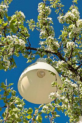 Lampe im Baum - p533m758621 von Böhm Monika