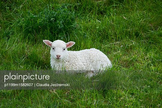Lamm - p1199m1582607 von Claudia Jestremski