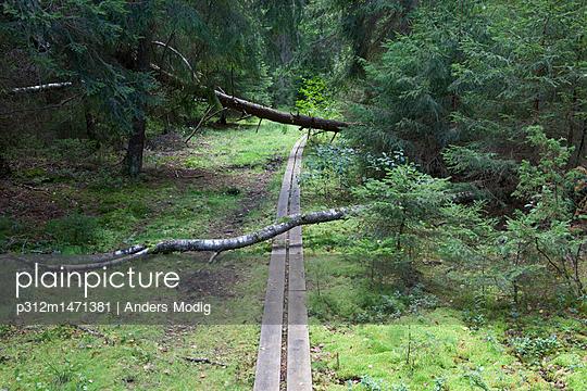 p312m1471381 von Anders Modig