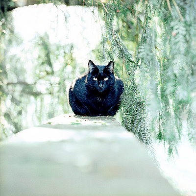Black cat sitting under a tree - p5450025 by Ulf Philipowski