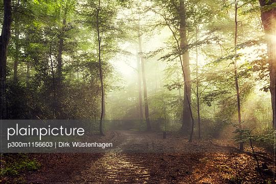 p300m1156603 von Dirk Wüstenhagen