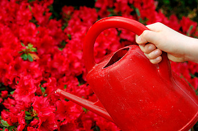 Watering red flowers - p6810009 by Sandrine Léon