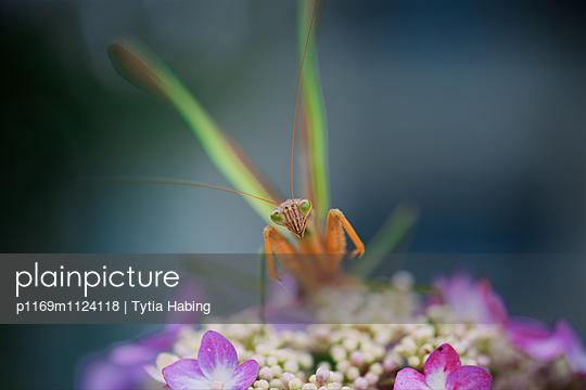 p1169m1124118 von Tytia Habing