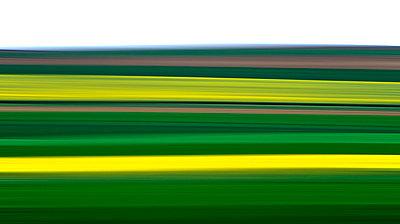 Linear - p813m778793 by B.Jaubert