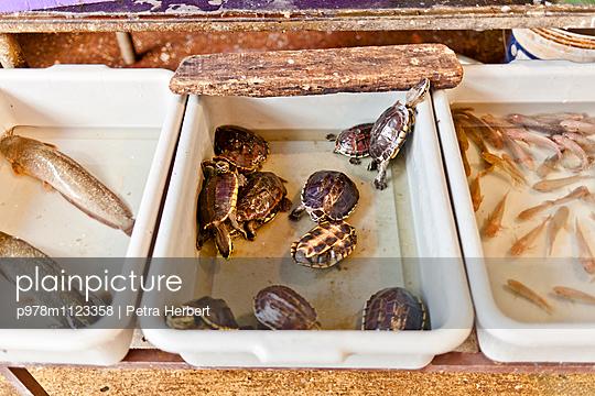 Schildkröten auf dem Markt - p978m1123358 von Petra Herbert