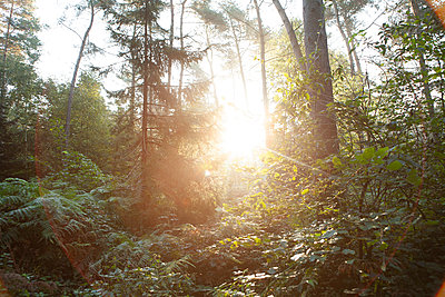 Sun rising over lush forest - p300m2293453 by Frank van Delft