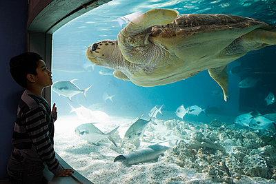 Boy watching sea turtle in aquarium - p9243223f by Image Source