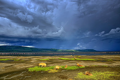 Kenya, Lake Nakuru National Park, spotted hyenas in front of Lake Nakuru - p300m1120938f by David Santiago Garcia