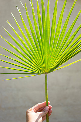 Palm leaf - p454m1525732 by Lubitz + Dorner