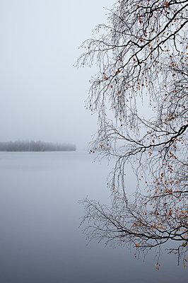 Mist - p971m2027804 by Reilika Landen
