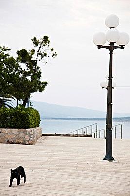Croatia, A black cat walks across the promenade - p1026m762572f by D.Secen-D.Steets