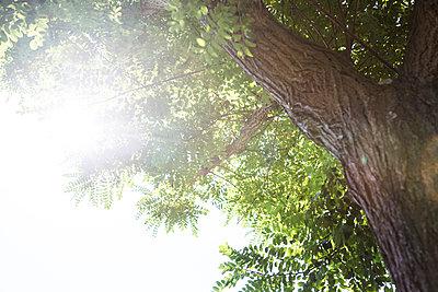 Gutes Wetter - p1057m1058024 von Stephen Shepherd