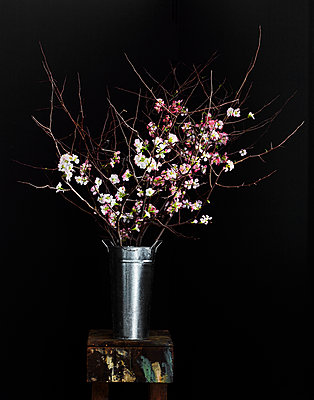 Apple blossom - p1397m2076482 by David Prince