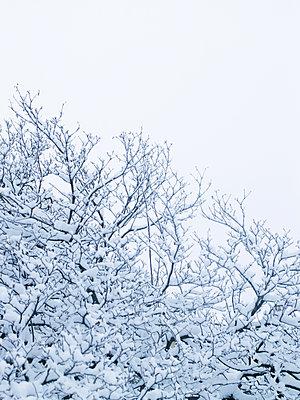 Schneebedeckte Bäume - p1462m1515756 von Massimo Giovannini