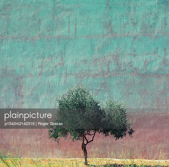 Single tree against coloured wall - p1542m2142319 by Roger Grasas