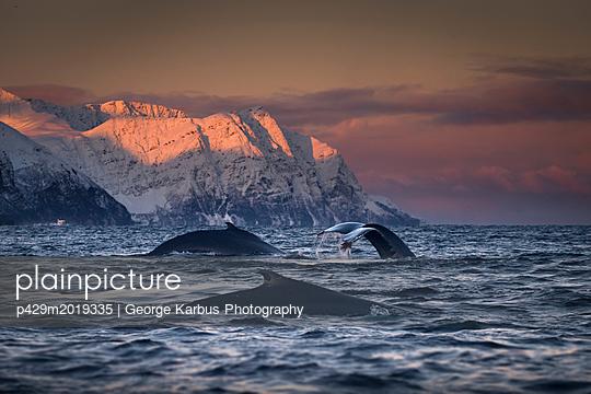 p429m2019335 von George Karbus Photography