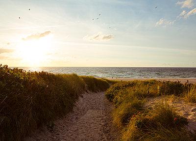 Dünenlandschaft und Strand in Kampen - p432m1190759 von mia takahara
