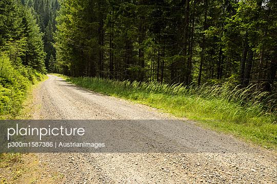 Austria, Styria, empty forest track - p300m1587386 von AustrianImages