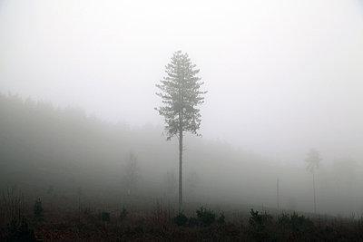 Baum - p1090m856362 von Gavin Withey