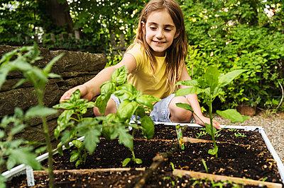 Girl picking basil in garden - p1427m2292056 by Jamie Atlas