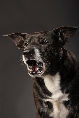 Old dog - p403m658594 by Helge Sauber