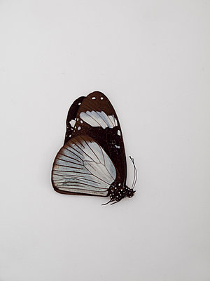 Butterfly - p444m1041383 by Müggenburg