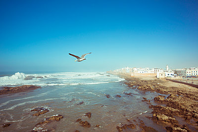 Essaouira - p432m887235 by mia takahara