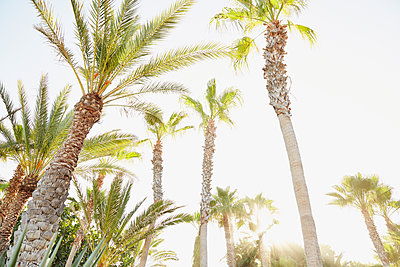 Low angle view of palm trees - p555m1463707 by Trinette Reed