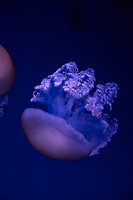 Jellyfish - p851m2077310 by Lohfink