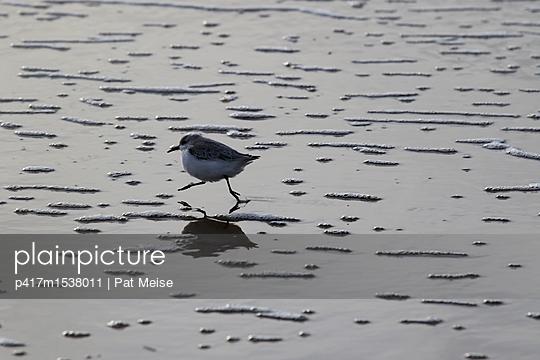 Strandläufer - p417m1538011 von Pat Meise