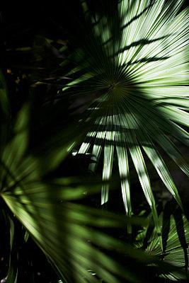 Palm Leafs - p938m754463 by Christina Holmes